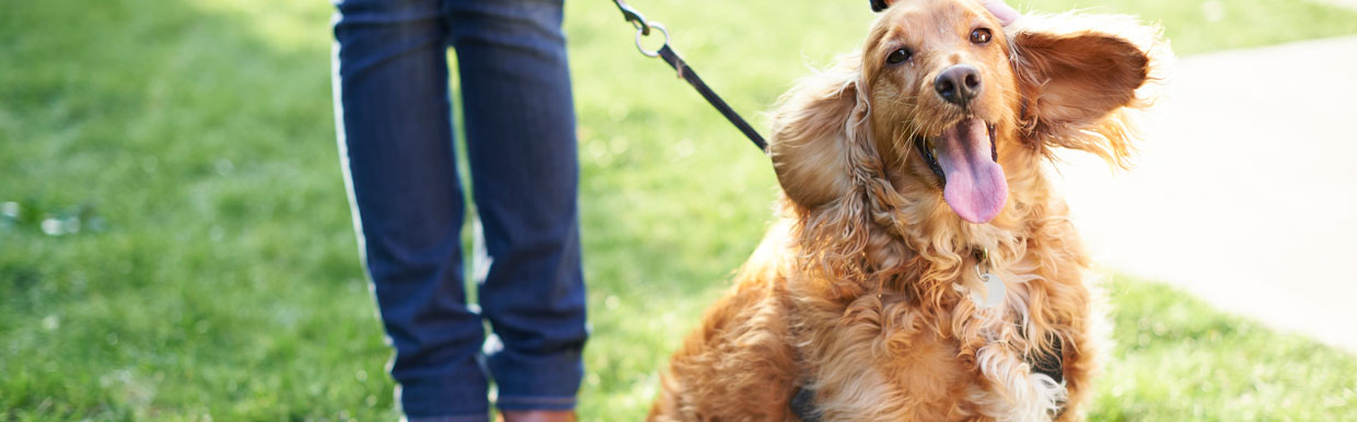 Keeping pets cool